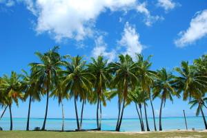 800px-Palm_trees
