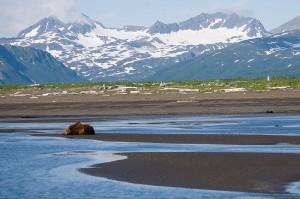 800px-Brown_Bear,_Hallo_Bay,_Katmai_National_Park_3